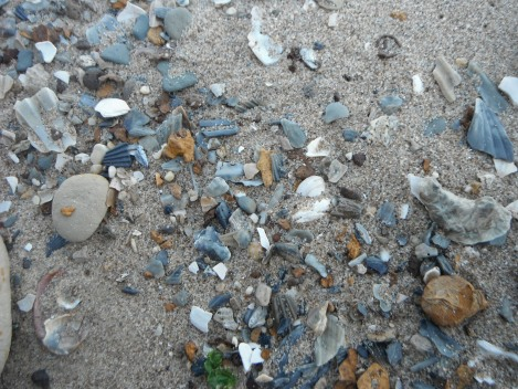 stones and shells and rocks and chunks of crumbly clay and seaweed - detritus of the bay!