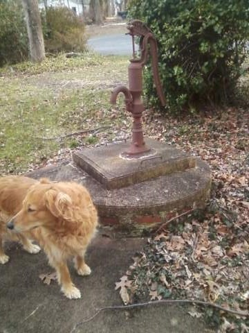 old well pump and the dog (Sara) - the pump never worked during my lifetime - it is now slowly being overtaken by ivy - being reclaimed by the earth