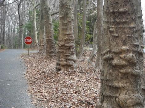 bumpy trees