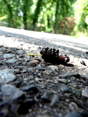 fallen mulberry