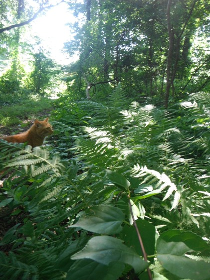 Fern Forest and the Hunting Cat