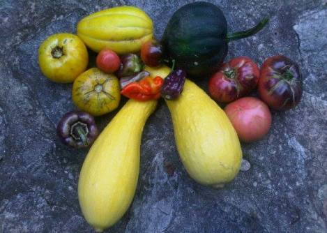 an August day's harvest from the garden