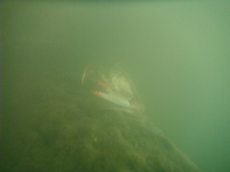 underwater cam view of crab