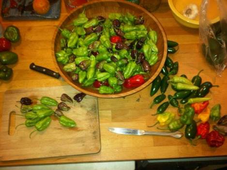 pepper harvest from the garden!