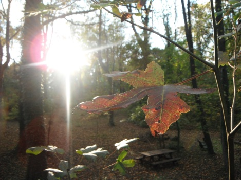 autumn woods and late afternoon sun