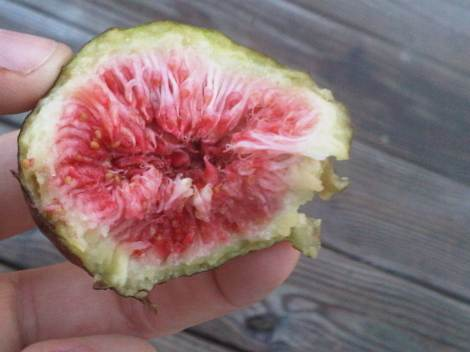fresh-off-the-plant boatyard fig, delicious!