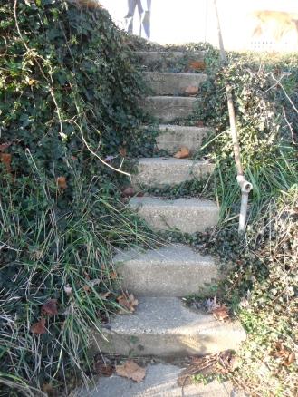ivy steps