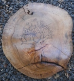 tree of life burned into round of fallen oak tree - wall hanging.
