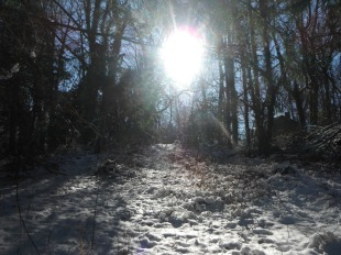 sunny, snowy path in the woods on Orchard Beach