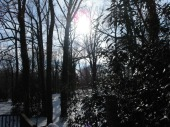sun and snow in the woods