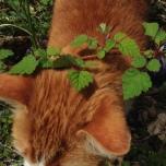 """the fur flower"" a.k.a. timius catius"
