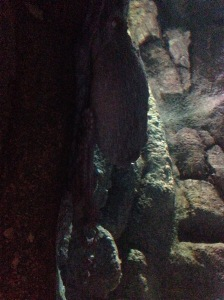 My old friend, the Giant Pacific Octopus - Monterey Bay Aquarium