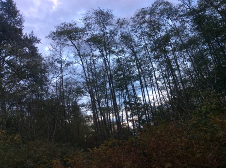 washington trees