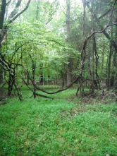 Dad's farm in Amelia County, VA - where I wrote this poem: https://emabeesart.wordpress.com/2012/12/07/if-i-keep-walking-in-the-woods-forever/